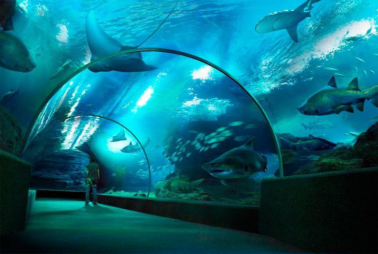 Аквариум Анталии/ Antalya Aquarium