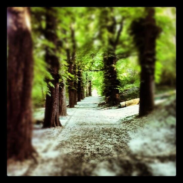 A havas májusi erdő :)  #trees #wood #hungary #budapest