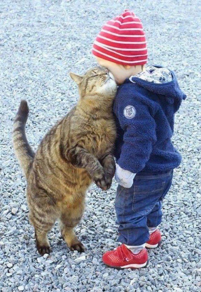 Die Katze kuschelt mit ihrem kleinen Eigentümer ...