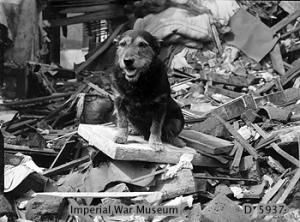 Rip the air raid warden dog - Rip was a very good dog who helped save lives during the Second World War. He was found as a stray by Air Raid Warden Mr E. King. The two became friends, and Rip accompanied Mr King on his rounds. He was not trained in search and rescue work, but he took to it instinctively, sniffing out people who had been buried in rubble after Luftwaffe bombings. In twelve months from 1940 to 1941 he is credited with saving the lives of over a hundred people.