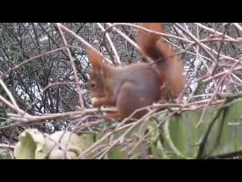 Wat voor geluid maakt een eekhoorn - YouTube