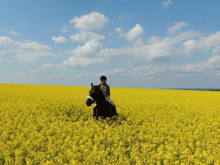 Ranczo Grandessa #horse #horseriding #Poland