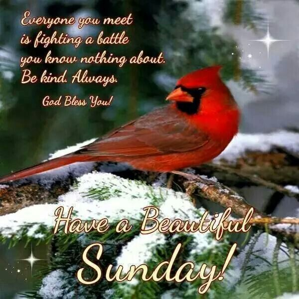 21 Best Cardinal Images On Pinterest Cardinals Thoughts