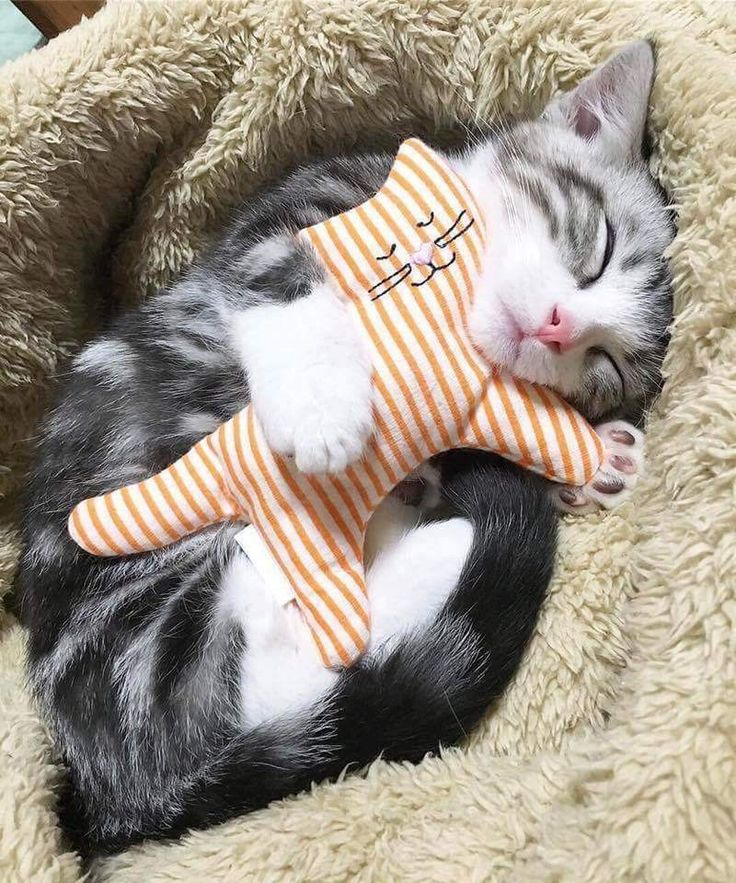 sleepy kitten - Tap the link now to see all of our cool cat collections!