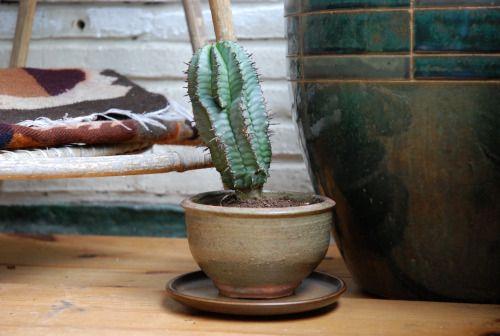 Green room, cacti, cactus, brick wall, stones, crystals