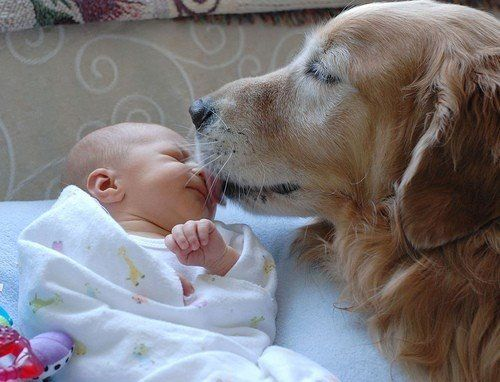 Study: Dog Dander Protects Children from common cold, asthma.