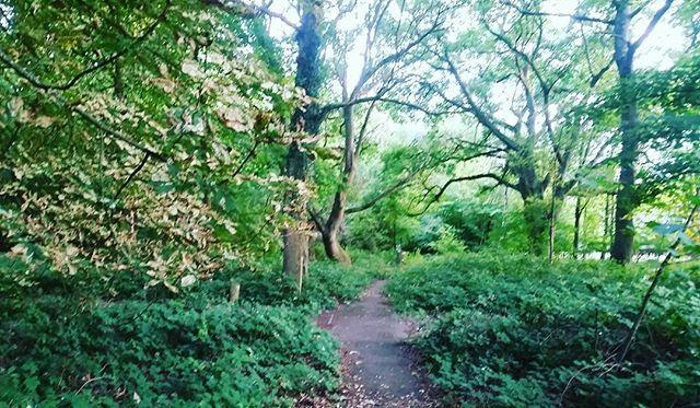 The forest beckons for a magical nature walk. Exploring the natural beauty of England 😄 #farnborough #hampshire #uk #englishsummer #summer #travel #travelgram #nature #lovenature #naturelovers #naturephotography #naturegram #natureshots #wildandfree #wanderlust #naturewalk #beautiful #naturepics #naturelover #natureza #naturel #naturalbeauty #stunning #travelphotography #summertime #forest Natural Beauty from BEAUT.E