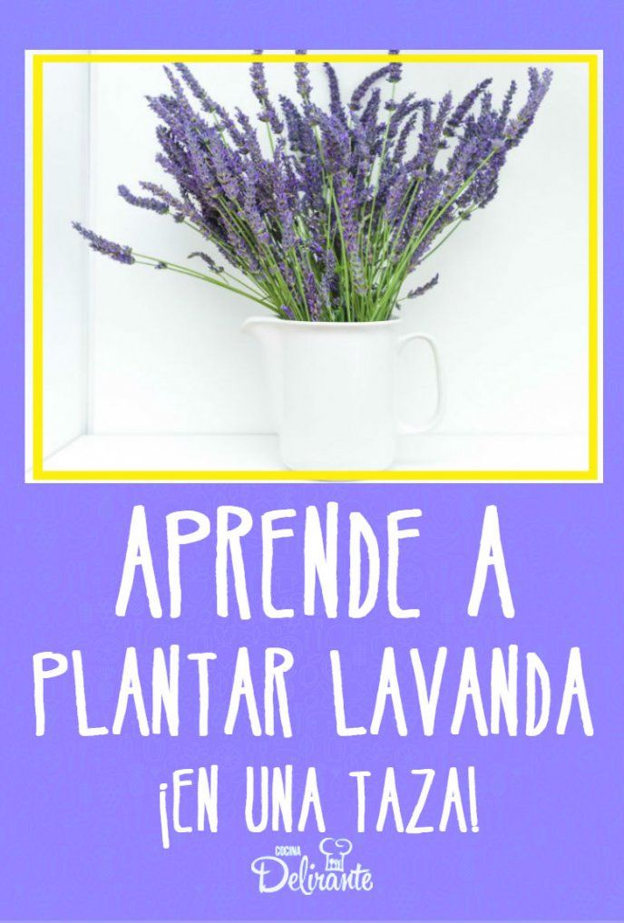 Learn how to plant lavender in a cup and perfume your home, ideas . Decoration Plante, Beautiful Soup, Homemade Cleaning Products, Medicinal Herbs, Spring Garden, Dream Garden, Permaculture, Vegetable Garden, Gardening Tips