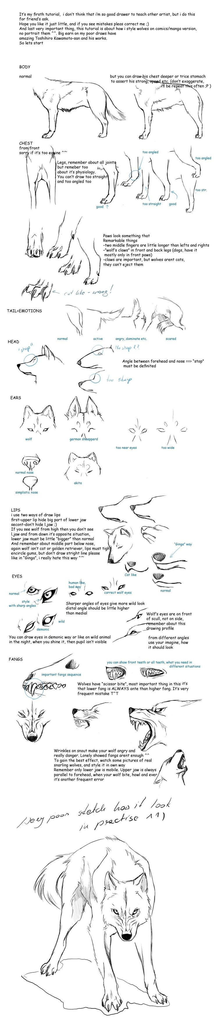 Wolf drawing tutorial
