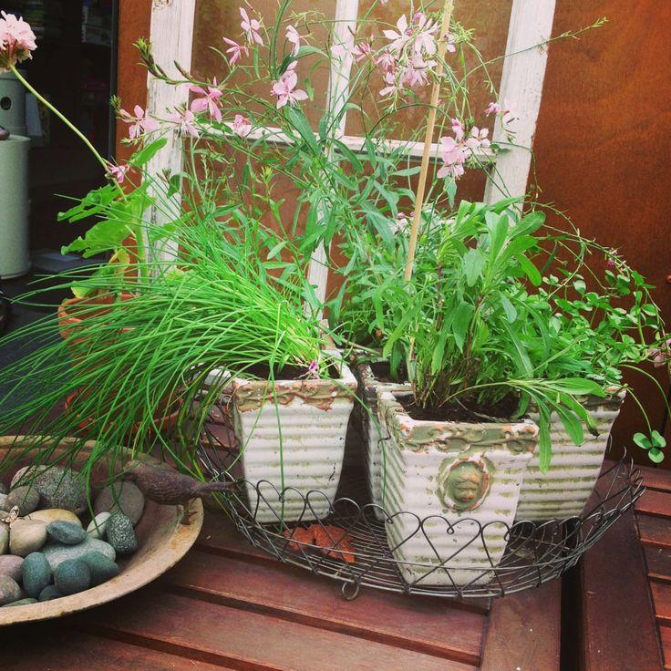 Blommor i småkrukor är alltid fint. Samla dem på ett fat så ser det mer ordnat ut. Allt inköpt på Brunnsvikens trädgård.