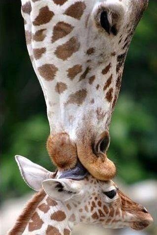 Tender kiss
