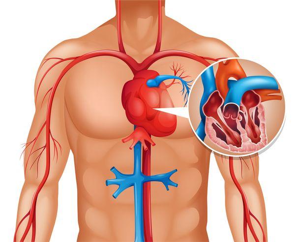 Yazıyı bütün arkadaşlarınızla paylaşarak kalp krizi hakkında bilinçlendirmeyi unutmayın.