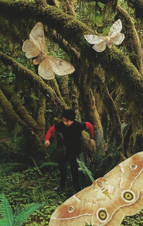 Collage inspiré de «Le dernier frère», de Nathacha Appanah. Le garçon, c'est Raj, qui court dans la forêt de fougères. Les deux papillons au-dessus de sa tête sont son grand frère et son petit frère décédés, le gros papillon son ami également décédé,...