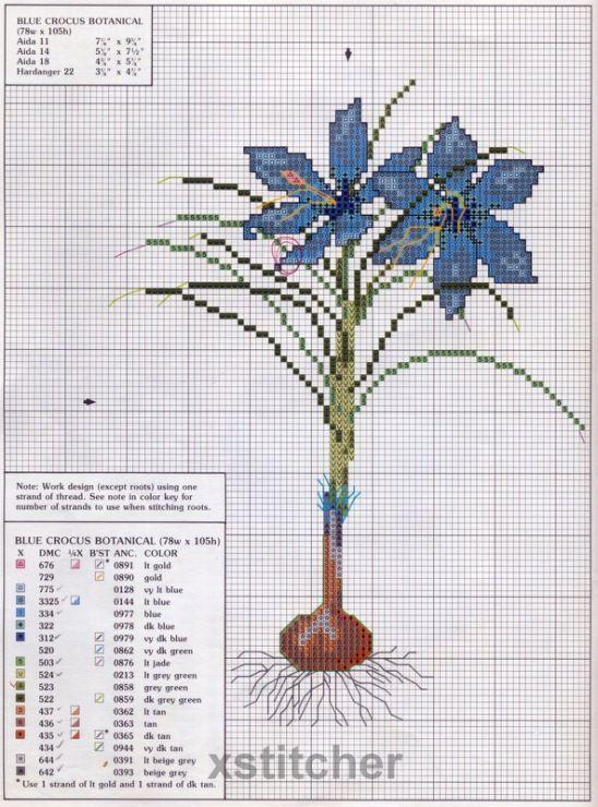 blu crocus botanical