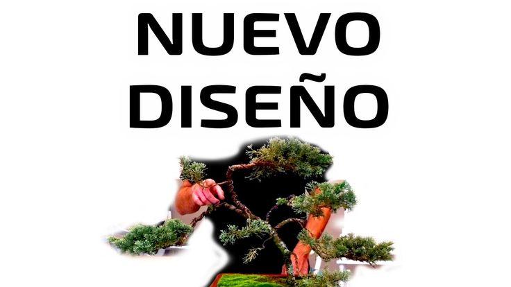 Nuevo Diseño para un Junípero Maltratado - Juniperus Chinensis (San José)