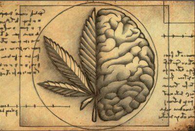 tipos de marihuana: Tolerancia hacia la marihuana