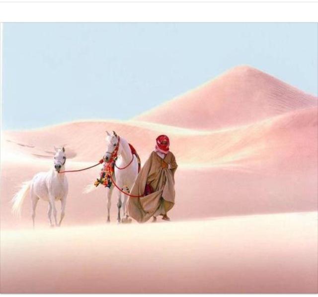 Arabian horses with their horseman