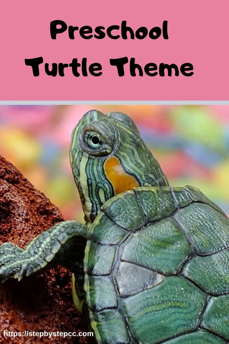 All about turtles for preschoolers. Turtle books, turtle