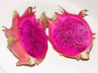 Dragon Fruit - Purple Haze is a large sweet fruit with relatively few seeds. The fruit weigh up to two pounds, and they have a pleasant gape, kiwi-like flavor. This variety is self pollinating, and like all of the other magenta fleshed fruit it will set fruit on its own. This variety does have commercial potential, and it can be eaten fresh, juiced, or used as a garnish.