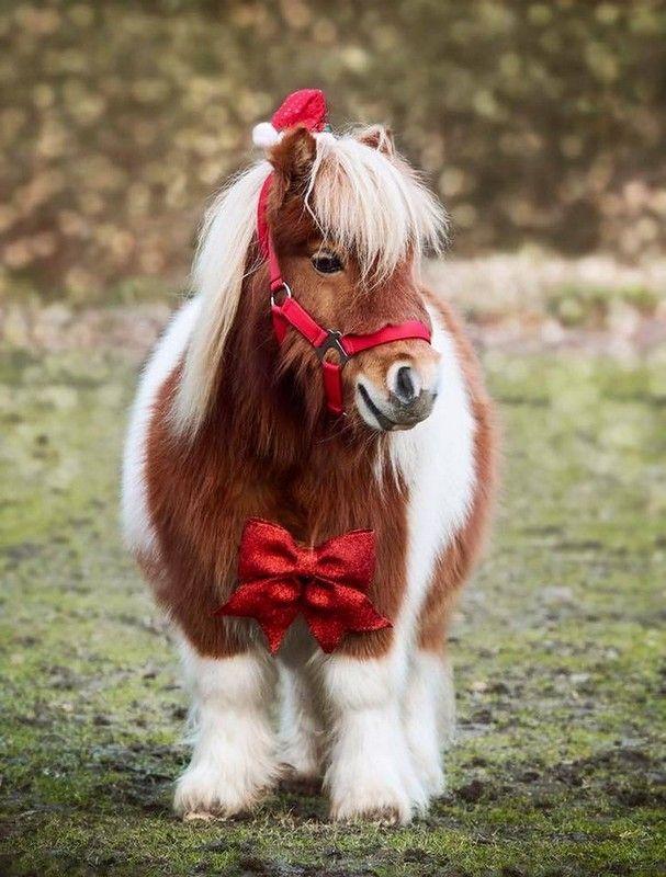 картинки маленьких лошадок
