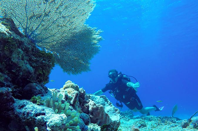 Dive and Drive Cozumel Adventure with Ferry Ride and Transport from Cancun and Riviera Maya