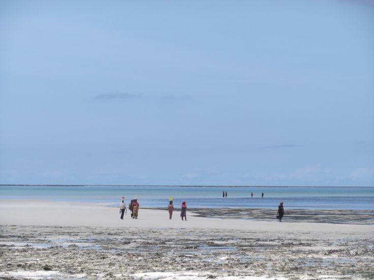 Vrouwen Jambiani beach #Zanzibar op zoek naar kokkels in de zee.