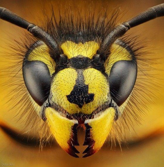 Prachtige macro foto's van insecten. Fotograaf Dušan Beňo is erg actief binnen deze vorm van fotografie en schoot deze geweldige platen van verschillende insecten.