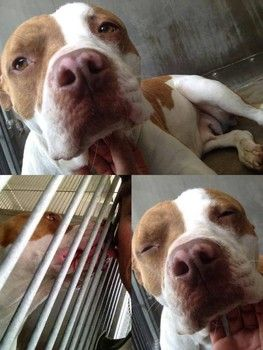 Dog confiscated from storage unit, taken to animal control