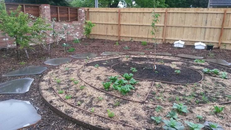 Our new addition, front garden. All  edible & or bee friendly.
