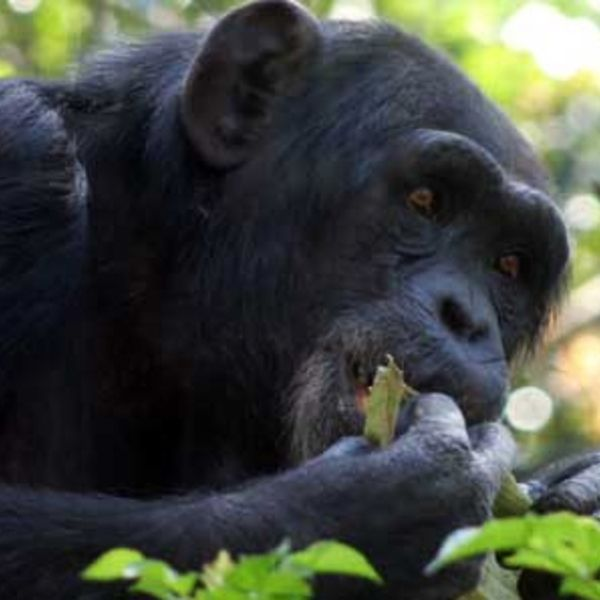 Check out this slideshow Free Zoo in Mexico City in this list A Perfect Sunday in Mexico City