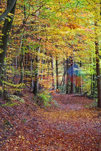 stock photo of forest trail with yellow trees red leaves on ground at autumn vertical