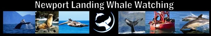Whale Watching Coupons Long Beach-Los Angeles-Dana Point-Newport Beach-Half Price Newport Landing