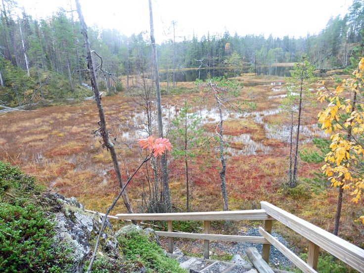 The Pieni Karhunkierros trail, Kuusamo. The berries and moss on the ground provide an array of vivid autumn colours.