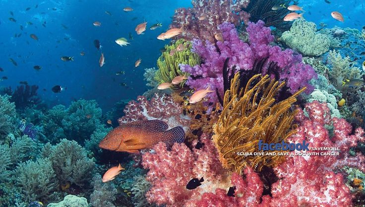 Papua New Guinea diving scuba dive vacation holiday package png tufi resort liveaboard walindi kavieng