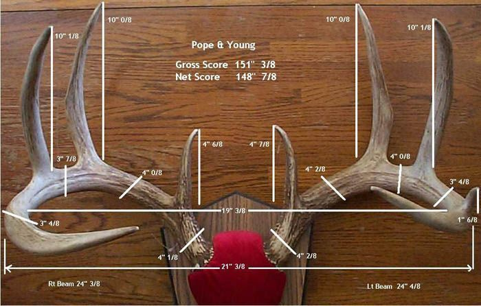 how to score a whitetail