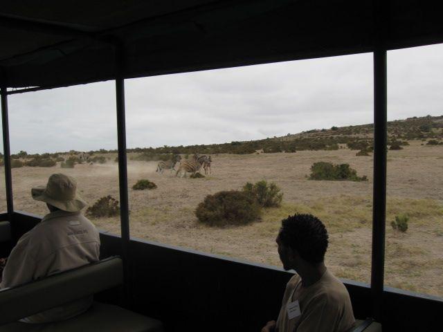 tractor safari at !Khwa ttu