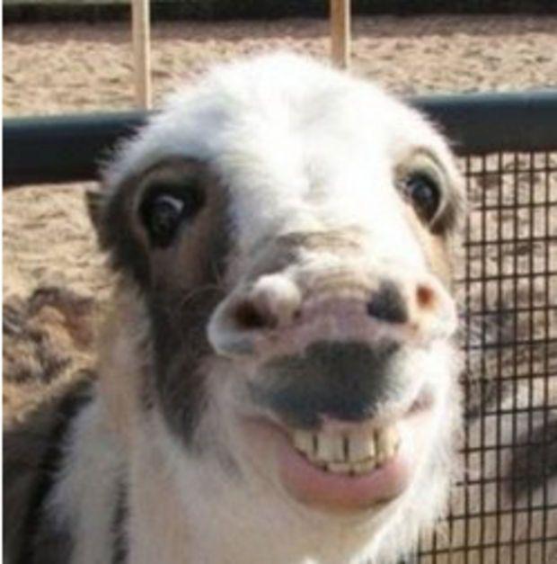 Un cheval qui sourit