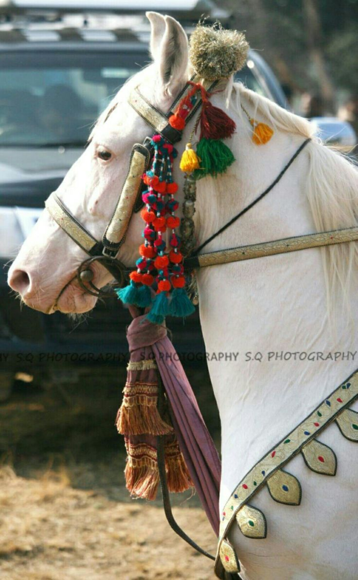 Imperatore horse vans for sale - Tillah Bridle And Breastcollar