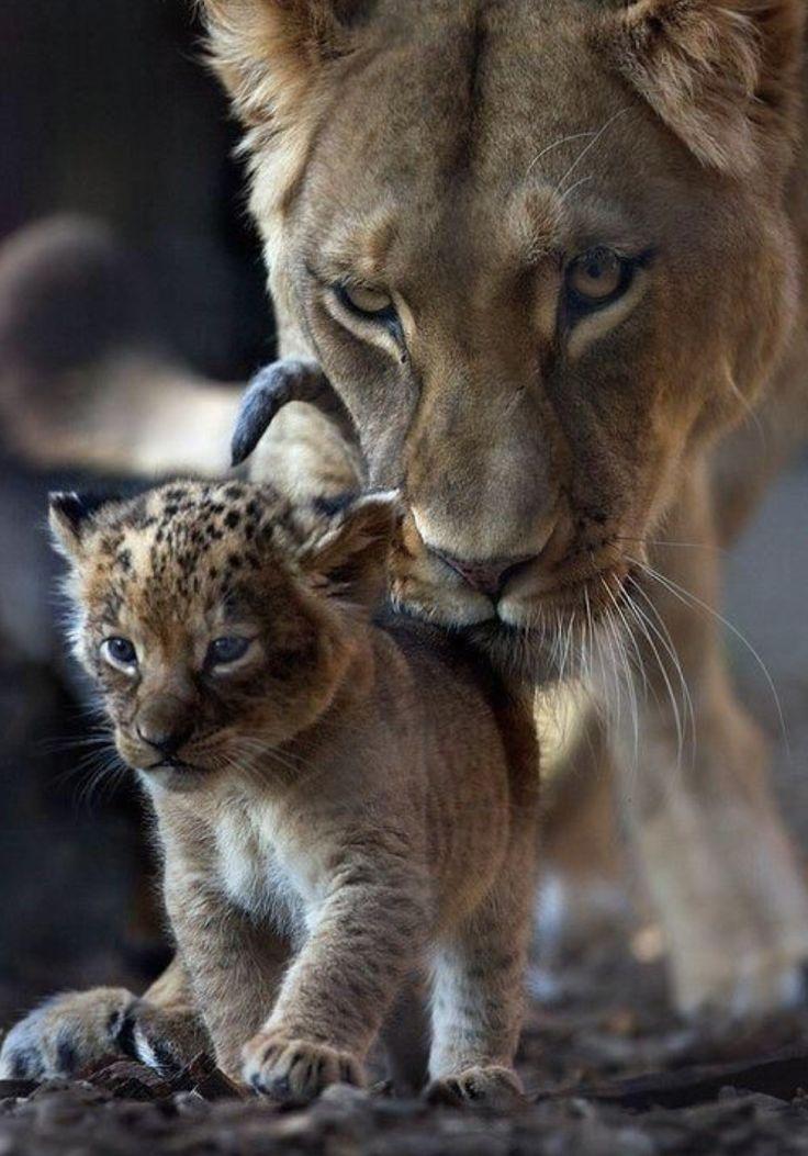 очевидными красивые картинки на аву животные с детенышами правильному углу наклона