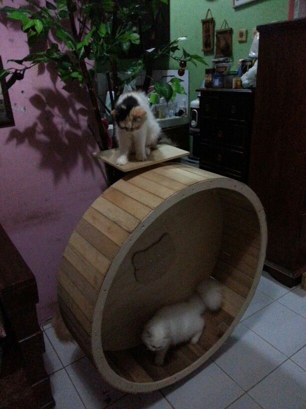 My Diy Cat Wheel Cat Kitten Bed House Playing Stand