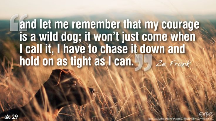 """""""Let me remember that my courage is a wild dog; it won't just come when I call it, I have to chase it down and hold on as tight as I can."""" Ze Frank"""