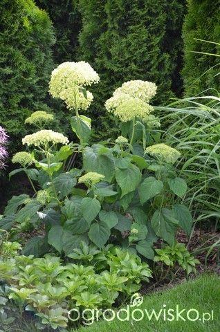 Ogród tworzę nowoczesny czyli wewnętrzna walka jak nie zostać kokoszką :) - strona 943 - Forum ogrodnicze - Ogrodowisko
