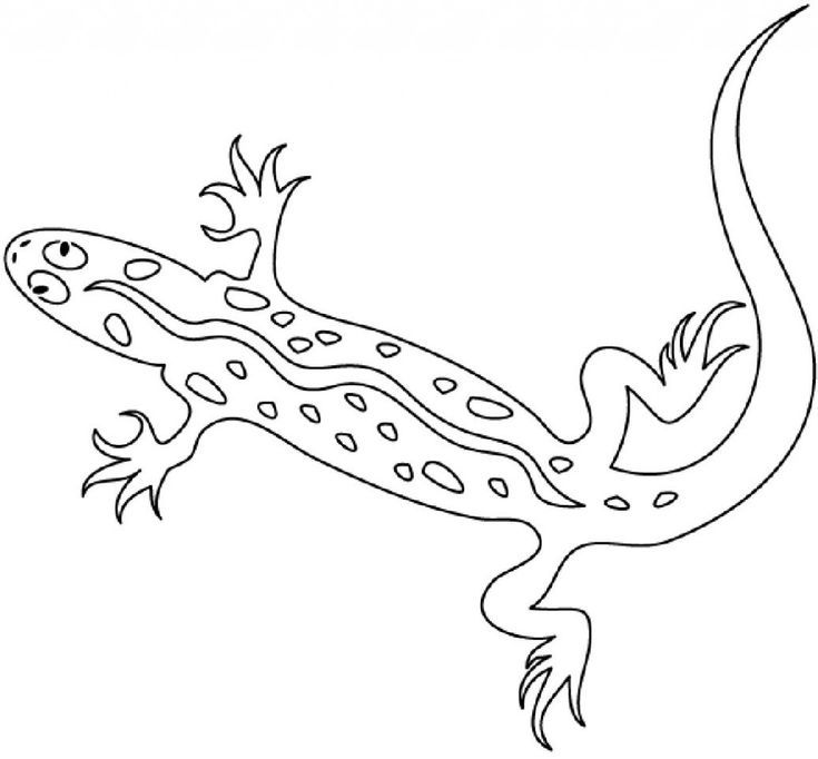 Newt Animal Coloring Pages You'll Love