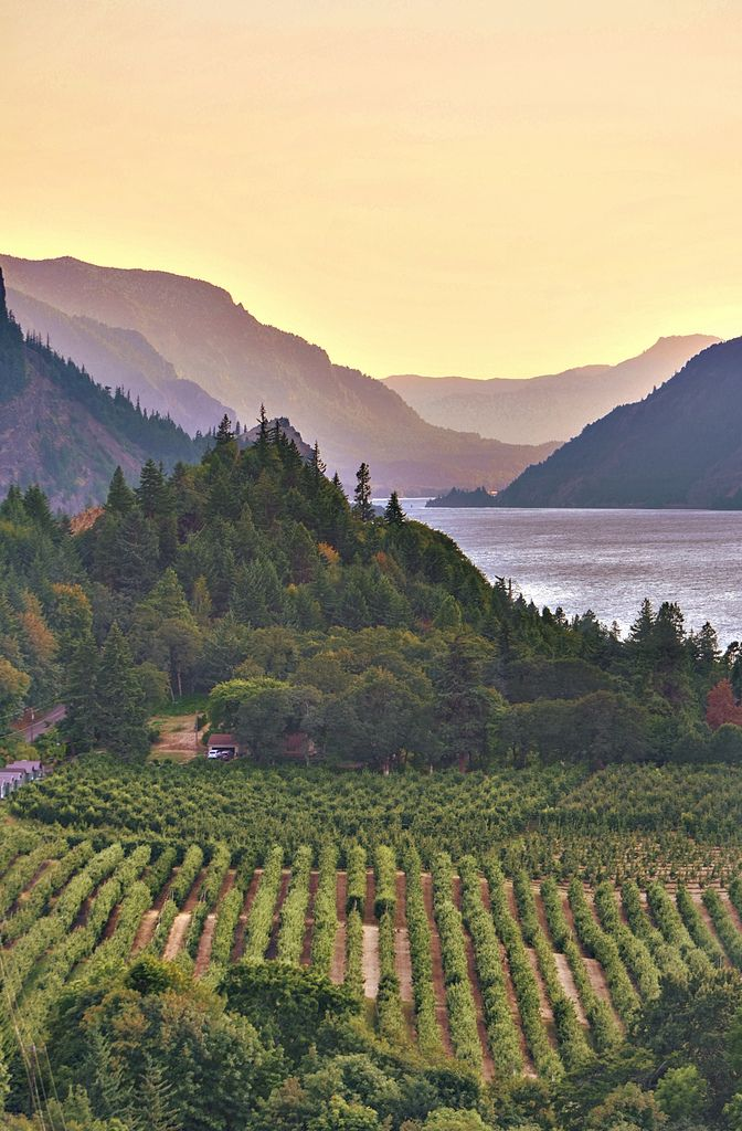 Hood River © D.H. Parks Looking west down the Columbia River gorge from the outskirts of Hood River, OR.