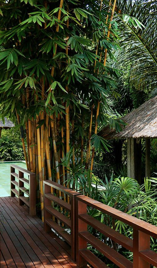 Experience a wellness escape in a luxury villa, Bali spirit lifting retreats.
