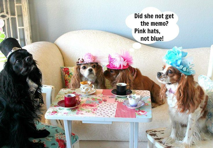 It's time for the Fidose of Reality Love is in the Air Valentine Dog Photo Contest 2014!!! You can win a $100 gift certificate!