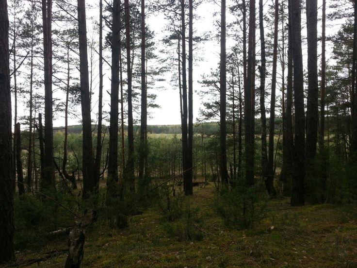 Поход в лес, просветление. Как стать счастливым.
