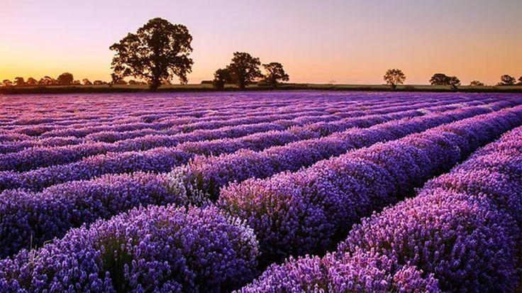 Equinoccio primaveral: Ocho cosas imprescindibles que trae esta primavera
