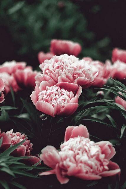 Pink peonies - wedding bouquet - wedding reception - wedding ceremony