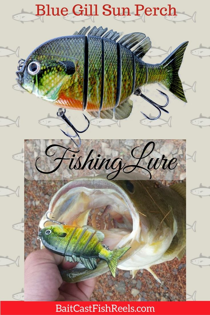 Best 25 fishing lures ideas only on pinterest beer box for Blue bass fish